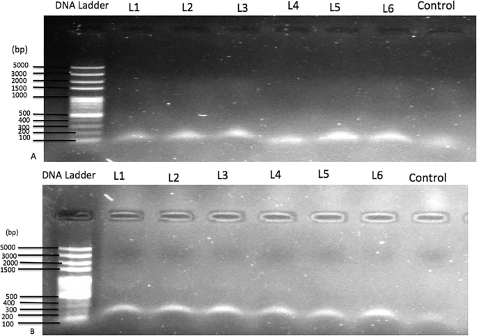 Asymptomatic malaria infections and Pfmdr1 mutations in an endemic