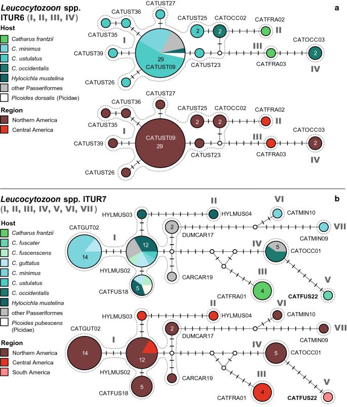 haemosporidian parasite lineages
