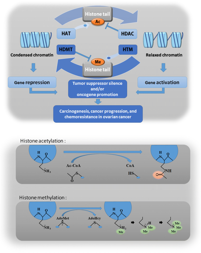 Epigenetics In Ovarian Cancer Premise Properties And Perspectives Molecular Cancer Full Text