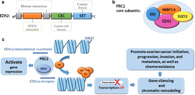Epigenetics In Ovarian Cancer Premise Properties And Perspectives Springerlink
