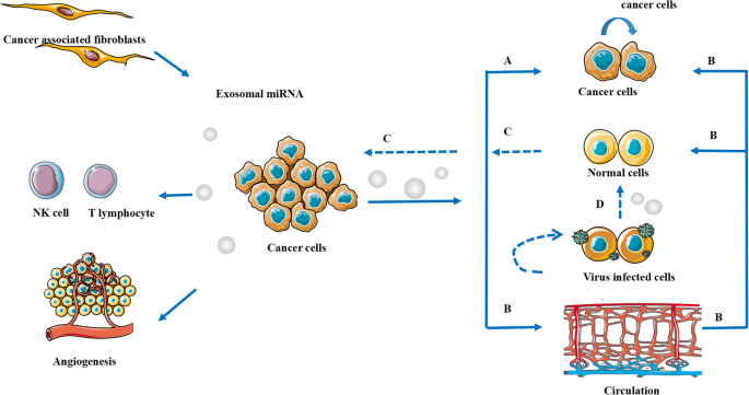 Effect of exosomal miRNA on cancer biology and clinical
