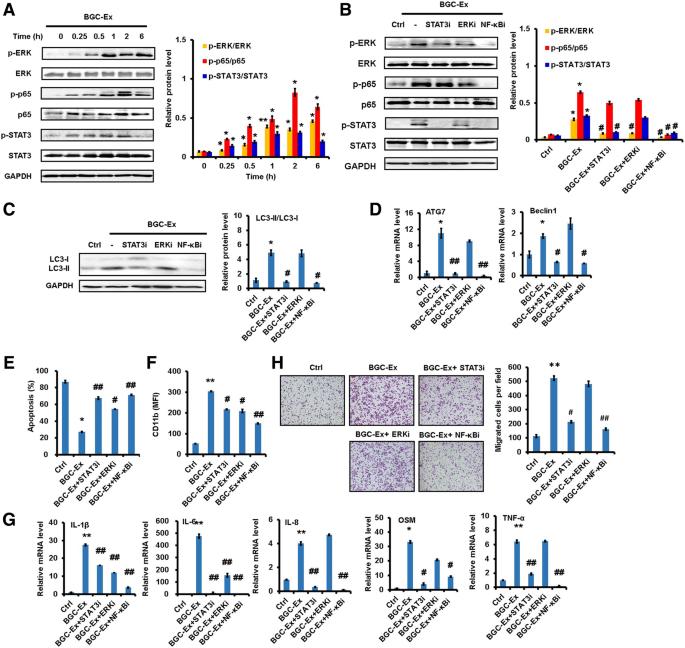 Tumor-derived exosomes induce N2 polarization of neutrophils