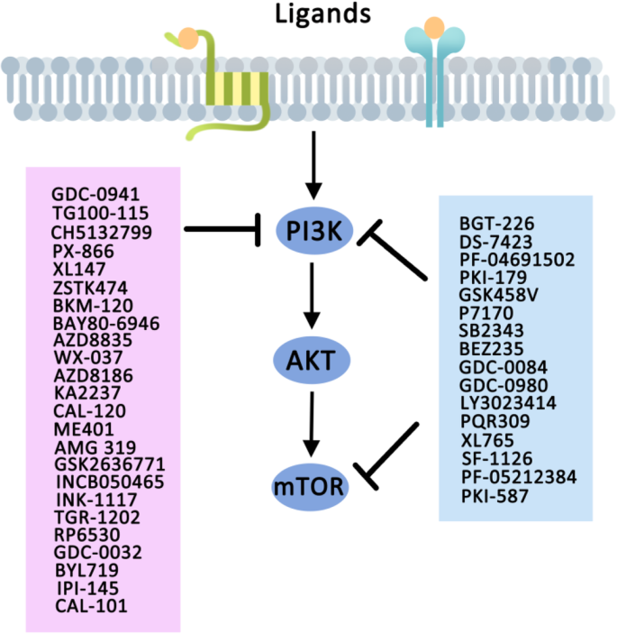 Targeting Pi3k In Cancer Mechanisms And Advances In Clinical Trials Molecular Cancer Full Text