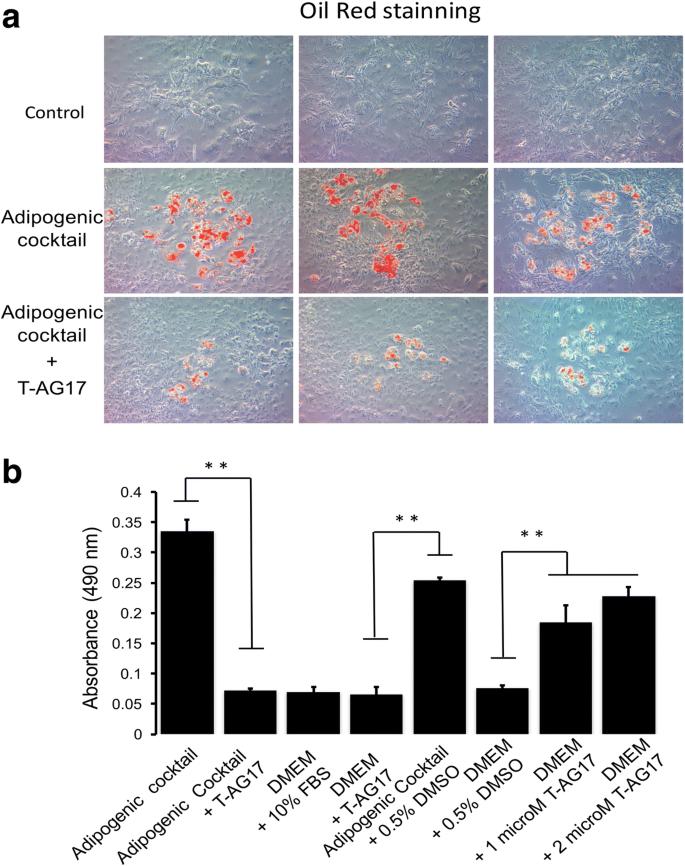 Tyrphostin AG17 inhibits adipocyte differentiation in vivo