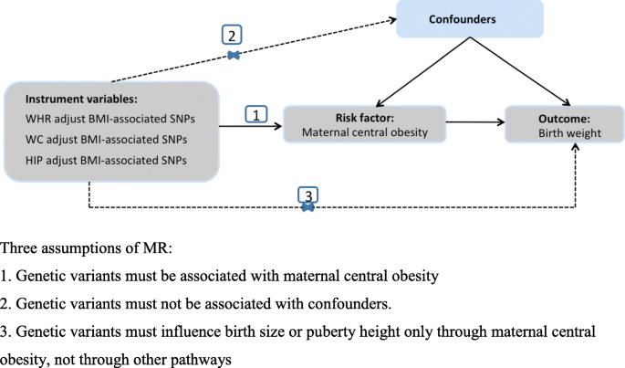 Maternal central obesity and birth size: a Mendelian randomization ...