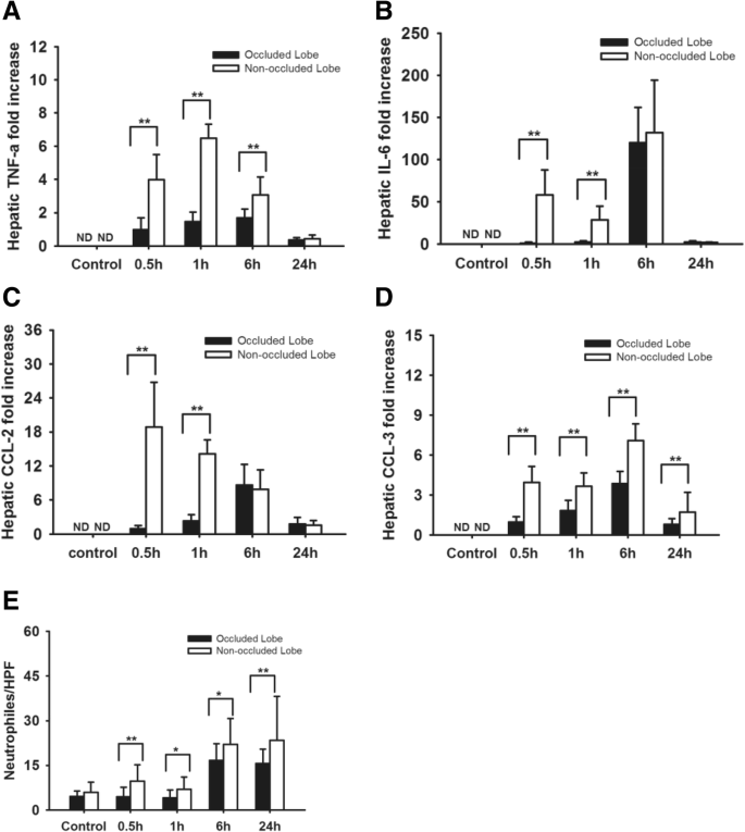 The severity of LPS induced inflammatory injury is negatively