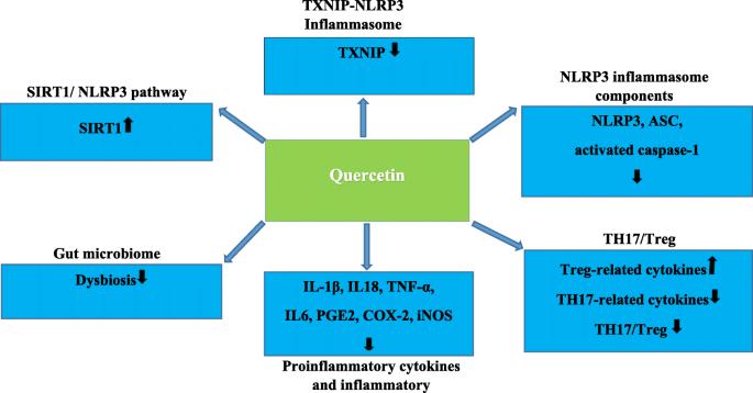 Hemolitic e coli prostatita Quercetin dysbiosis Quercetin dysbiosis