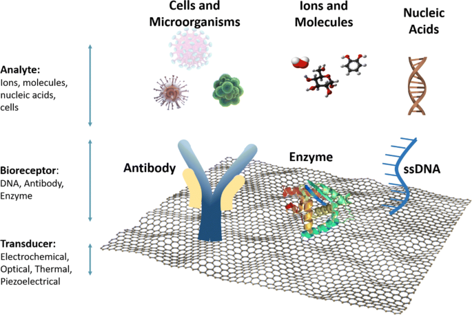 Recent advances in graphene-based biosensor technology with applications in  life sciences   Journal of Nanobiotechnology   Full Text