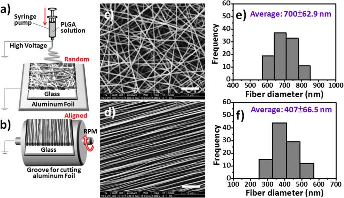 Random and aligned electrospun PLGA nanofibers embedded in