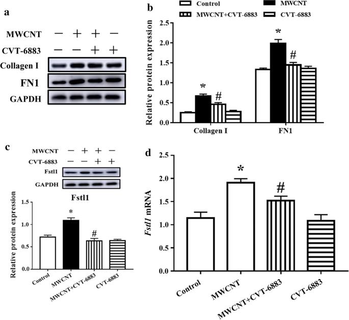 Role of A 2B adenosine receptor-dependent adenosine signaling in