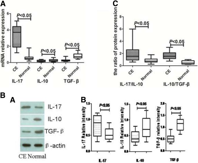 Endometrial TGF-β, IL-10, IL-17 and autophagy are