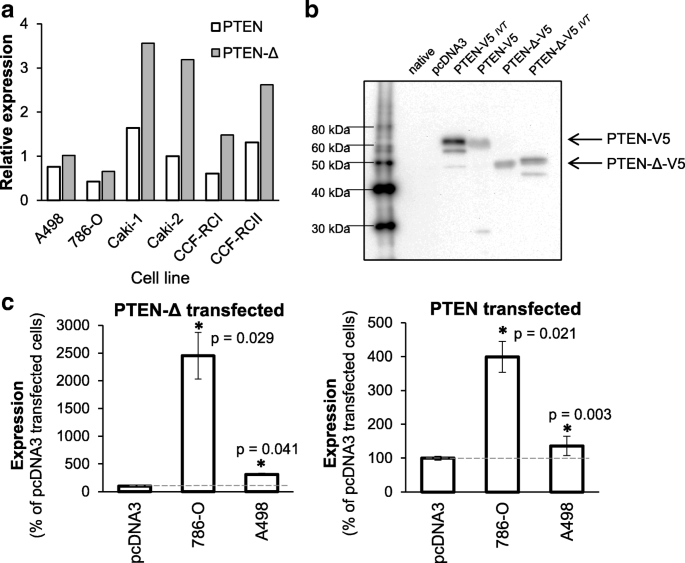 In renal cell carcinoma the PTEN splice variant PTEN-Δ shows