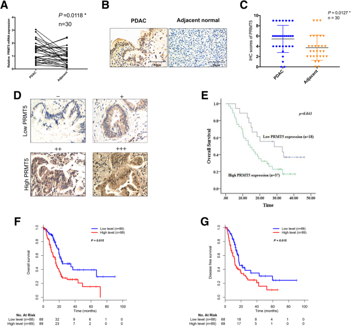 PRMT5 enhances tumorigenicity and glycolysis in pancreatic