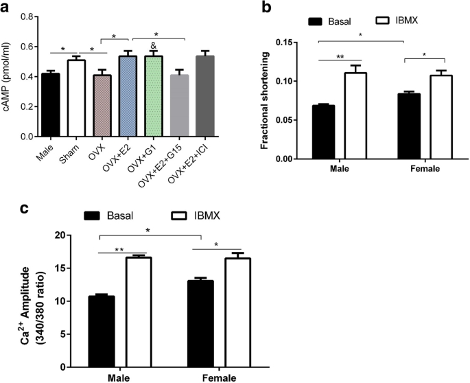 Estrogen regulation of cardiac cAMP-L-type Ca 2+ channel pathway