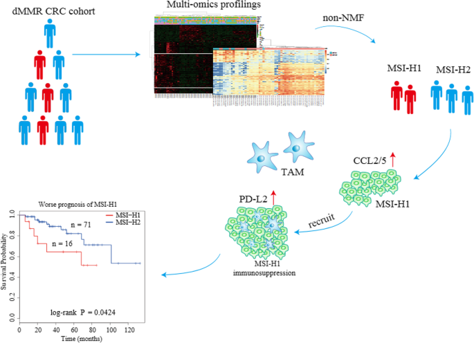 Subtyping Of Microsatellite Instability High Colorectal Cancer Cell Communication And Signaling Full Text