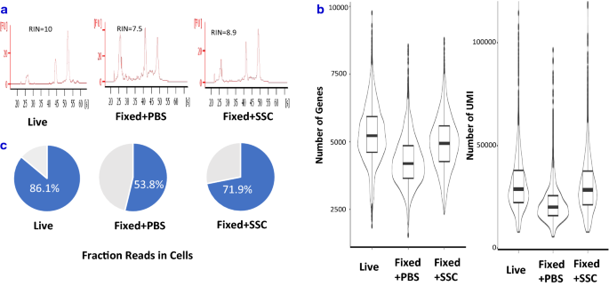 PBMC fixation and processing for Chromium single-cell RNA