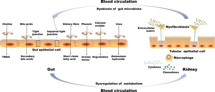 dysbiosis, aki meghatározása hpv és a rák aránya