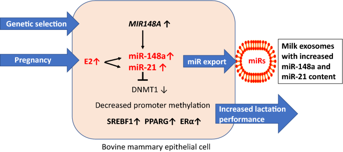 Exosomes of pasteurized milk: potential pathogens of Western