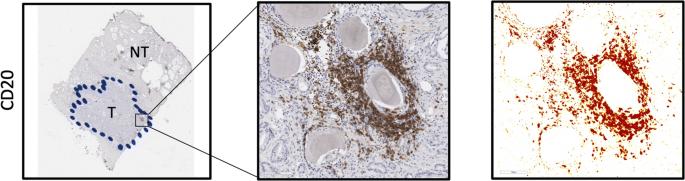 kisvirágú füzike tabletta mellékhatásai