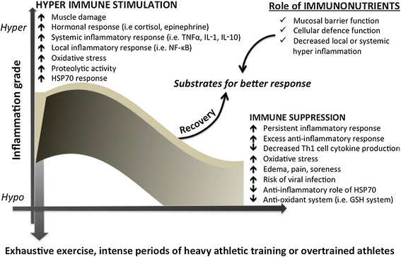 Amino acid supplementation and impact on immune function in the