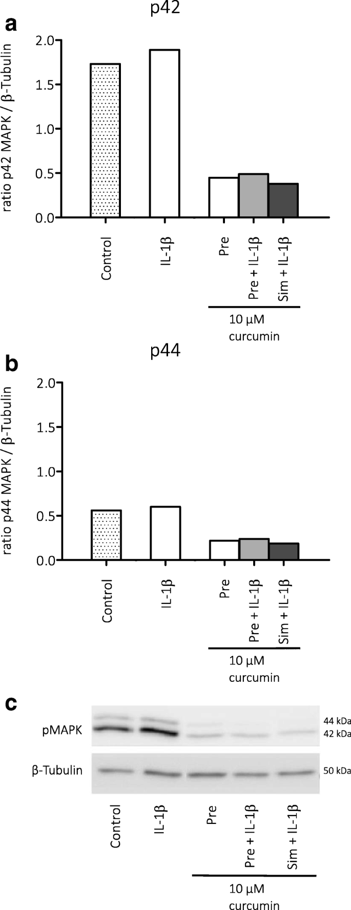 Effects of rapamycin and curcumin on inflammation and