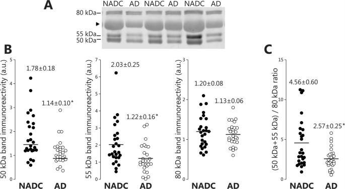 Levels of ADAM10 are reduced in Alzheimer's disease CSF | Journal of