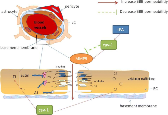 A review of the role of cav-1 in neuropathology and neural