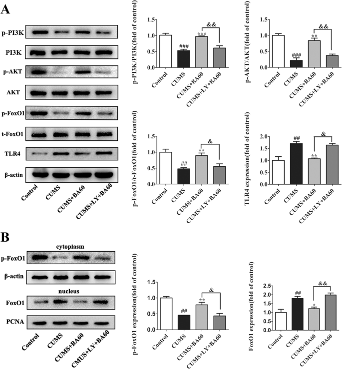 Baicalin ameliorates neuroinflammation-induced depressive