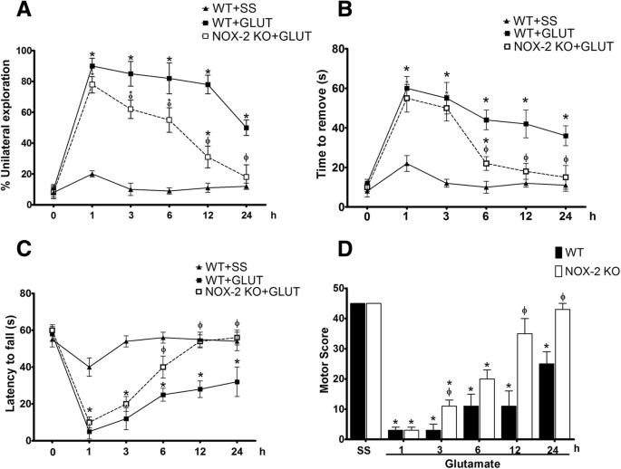 Role of NADPH oxidase-2 in the progression of the inflammatory