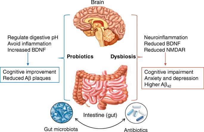 Dysbiosis antibiotics. Dysbiosis candida, Dysbiosis candida