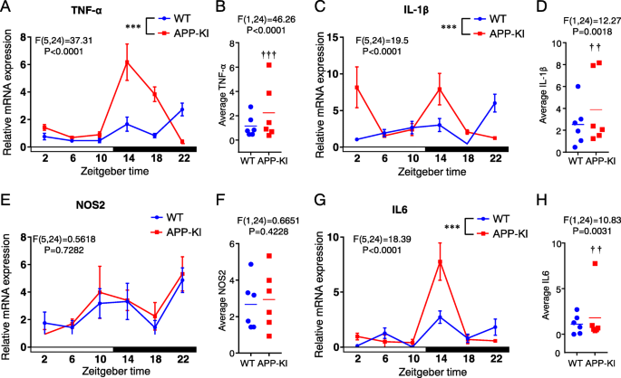 An impaired intrinsic microglial clock system induces