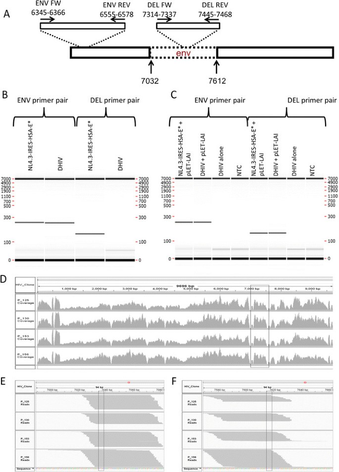 Replication competent virus as an important source of bias in HIV
