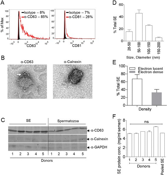 Human semen contains exosomes with potent anti-HIV-1