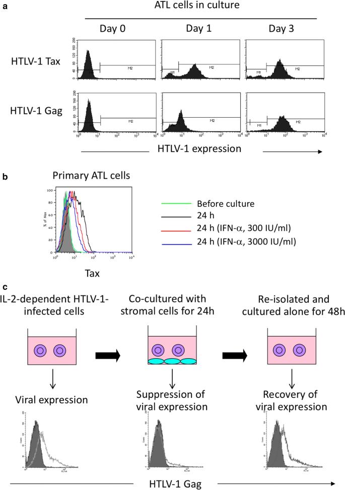 Impact of host immunity on HTLV-1 pathogenesis: potential of