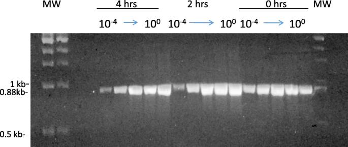 Oxygen-dependent laser inactivation of murine norovirus