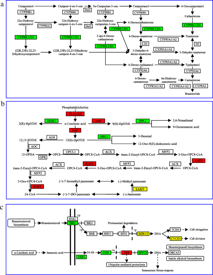 Transcriptome analysis of Nicotiana benthamiana infected by