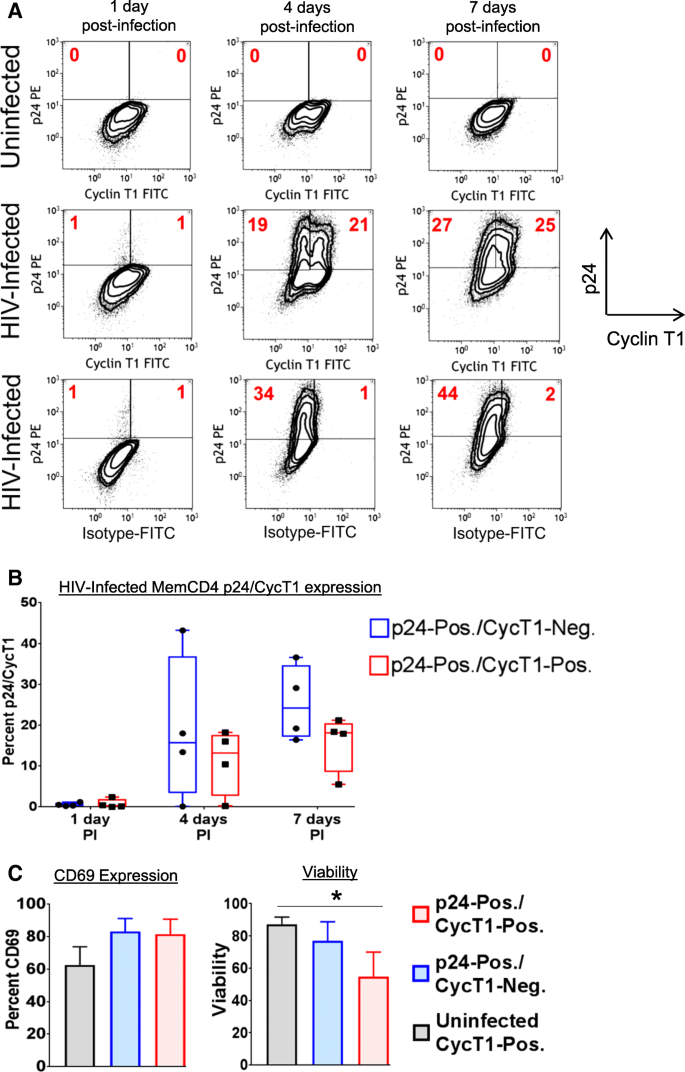 Regulation of cyclin T1 during HIV replication and latency