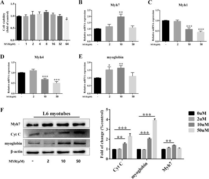 Myricetin improves endurance capacity by inducing muscle fiber type