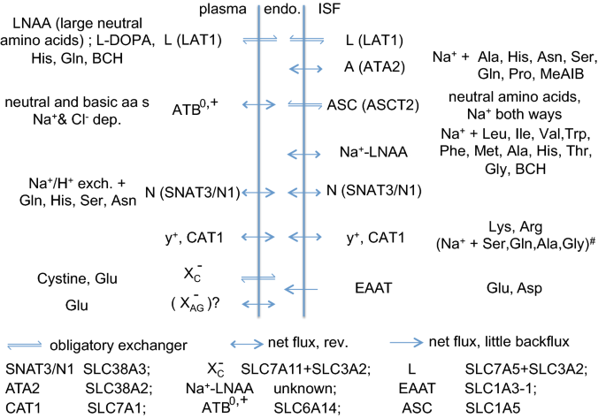 Elimination of substances from the brain parenchyma: efflux via