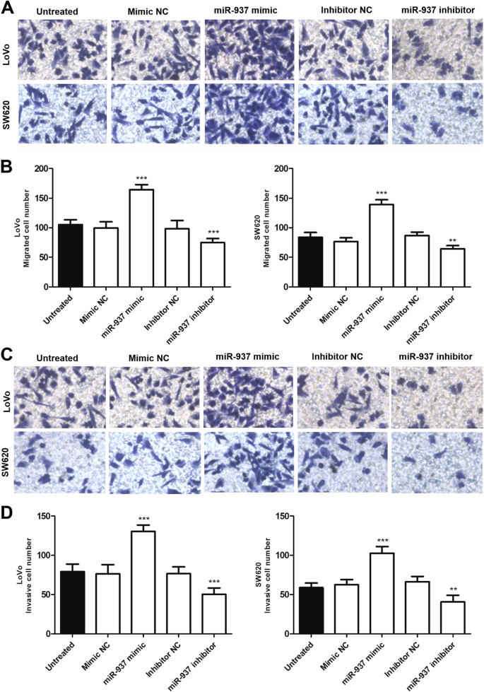 Microrna 937 Is Overexpressed And Predicts Poor Prognosis In Patients With Colon Cancer Diagnostic Pathology Full Text