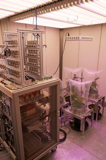 The Tree Drought Emission MONitor (Tree DEMON), an innovative system