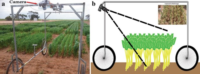 Detection and analysis of wheat spikes using Convolutional