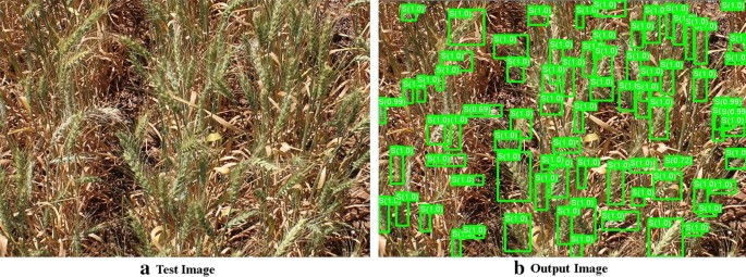 Detection and analysis of wheat spikes using Convolutional Neural