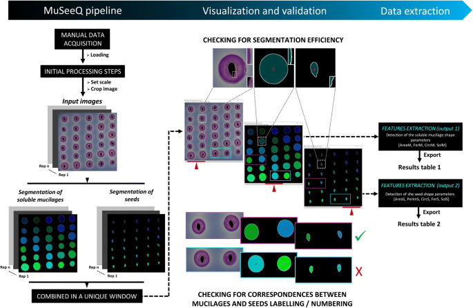 MuSeeQ, a novel supervised image analysis tool for the