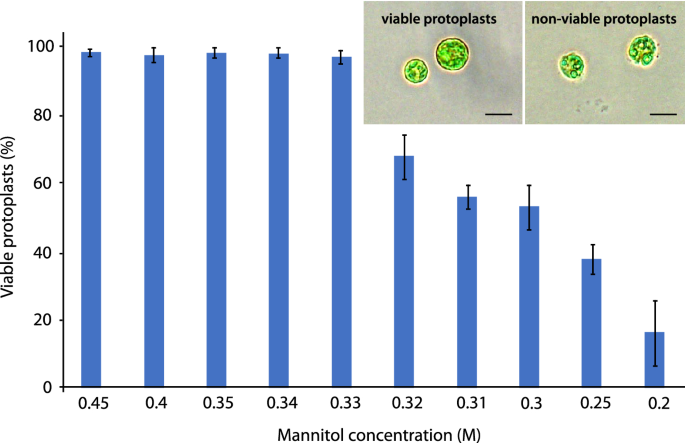 Regeneration and transient gene expression in protoplasts of