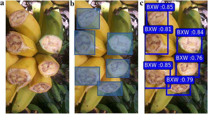 AI-powered banana diseases and pest detection | Plant