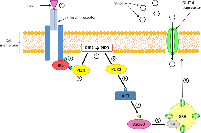 Understanding glycaemic control and current approaches for