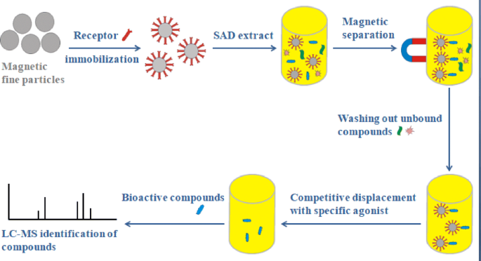 Rapid screening and identification of bioactive compounds