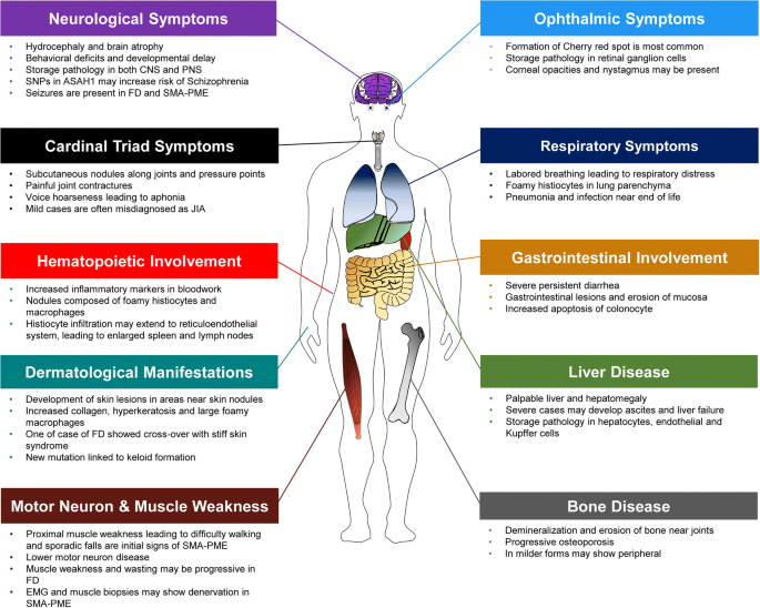 Acid ceramidase deficiency: Farber disease and SMA-PME