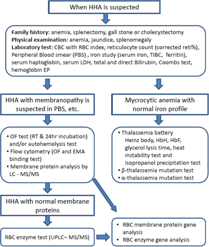 Molecular diagnosis of hereditary spherocytosis by multi